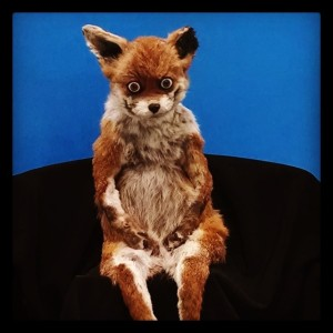 The Crap Taxidermy fox (promoting the Crap Taxidermy book, coming soon from Octopus Books/Ten Speed Press
